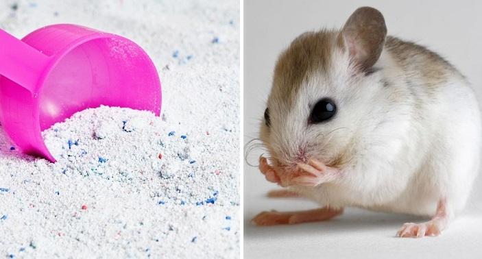 cách đuổi chuột bằng bột giặt