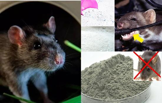 cách đuổi chuột bằng xi măng