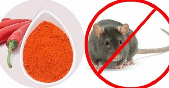 cách đuổi diệt chuột bằng ớt