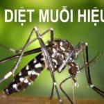 Cách đuổi, diệt muỗi hiệu quả nhất tại nhà