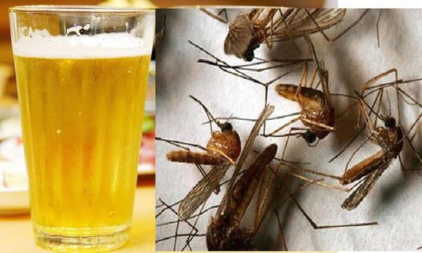 cách sử dụng bia để diệt muỗi