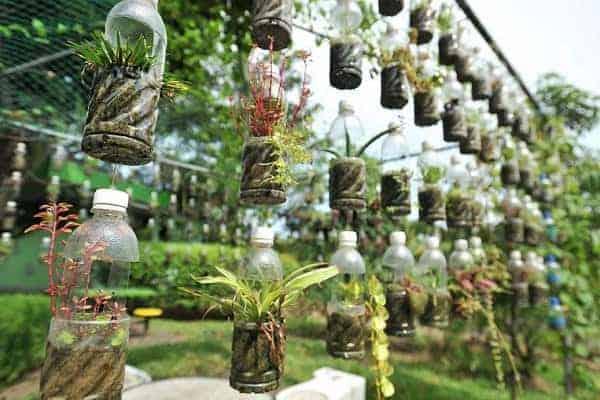 cách tái chế chai nhựa thành chậu trồng cây